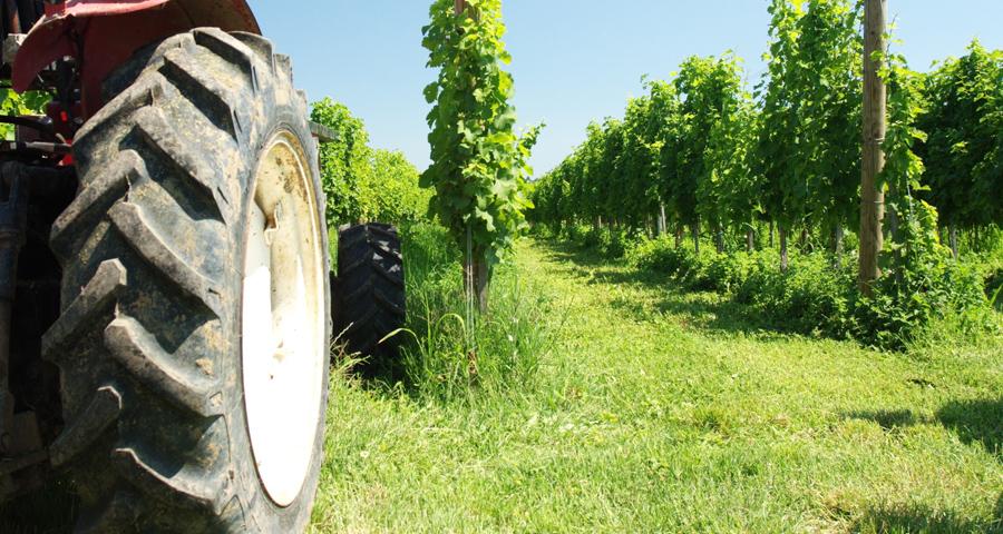 roue tracteur et vigne